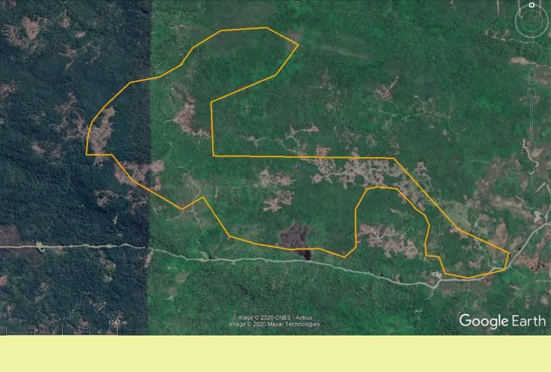 Amplio campo forestal