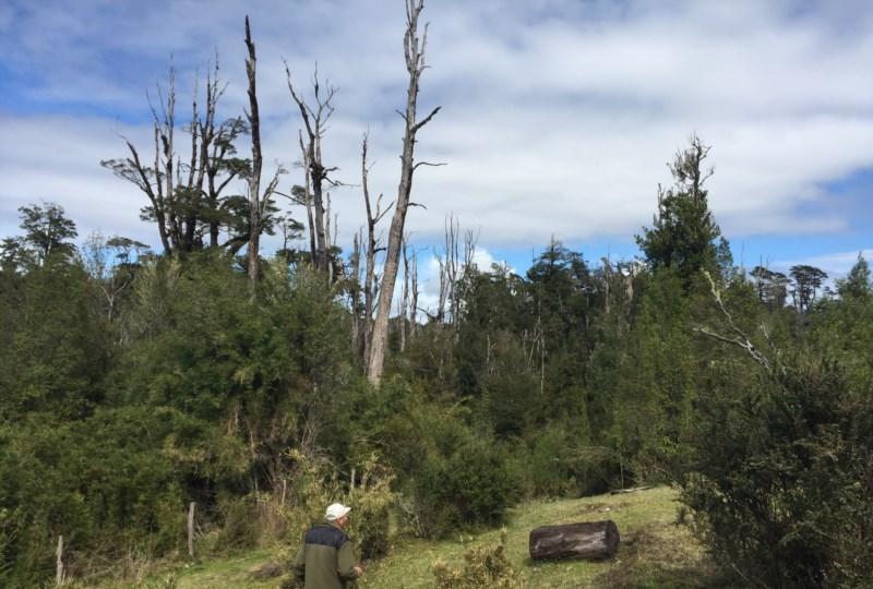 Campo Praderas, Bosque y Río a 15km de Ancud